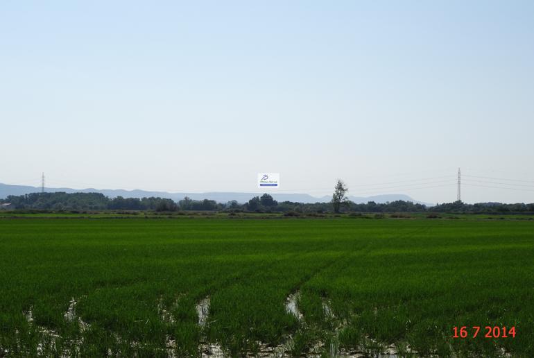 arroz-2.png